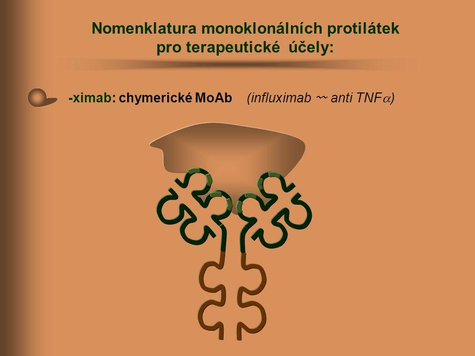 Nomenklatura monoklonálních protilátek pro terapeutické účely: -ximab: chymerické MoAb (influximab 〰 anti TNF  )