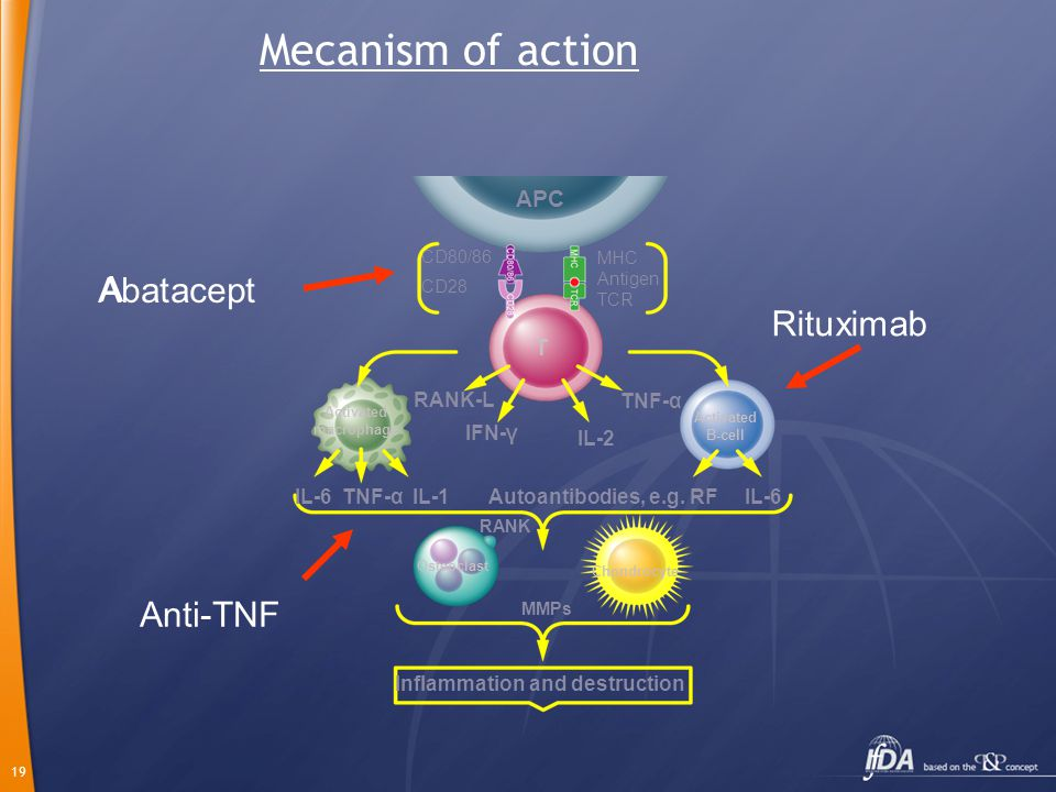 19 Mecanism of action IL-6 TNF-α IL-1 MMPs Autoantibodies, e.g. RF IL-6 APC T Activated macrophage Activated B-cell Osteoclast Chondrocyte IFN-γ RANK