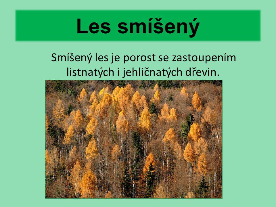 Les smíšený Smíšený les je porost se zastoupením listnatých i jehličnatých dřevin.