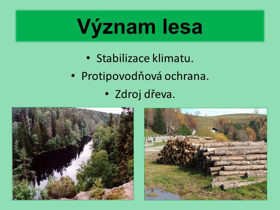 Význam lesa Stabilizace klimatu. Protipovodňová ochrana. Zdroj dřeva.