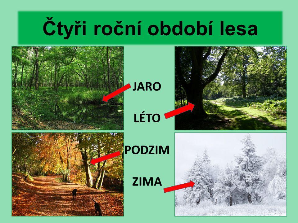 Čtyři roční období lesa JARO LÉTO PODZIM ZIMA