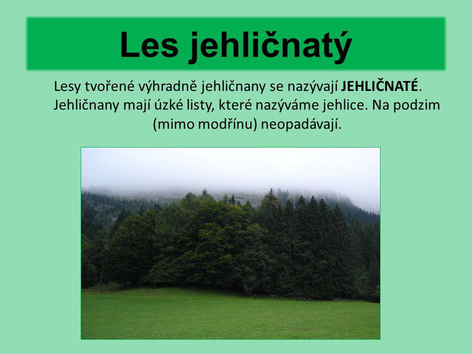 Les jehličnatý Lesy tvořené výhradně jehličnany se nazývají JEHLIČNATÉ. Jehličnany mají úzké listy, které nazýváme jehlice. Na podzim (mimo modřínu) n