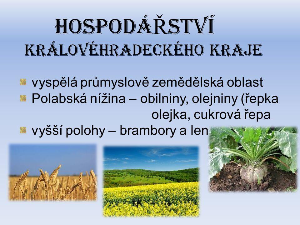 HOSPODÁ Ř STVÍ KRÁLOVÉHRADECKÉHO KRAJE vyspělá průmyslově zemědělská oblast Polabská nížina – obilniny, olejniny (řepka olejka, cukrová řepa vyšší polohy – brambory a len