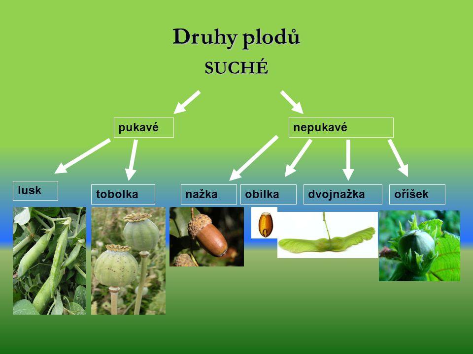 Plod vzniká po opylení a oplození květu - je složen ze semena a oplodí = přeměněný semeník - oplodí může být: dužnaté suché
