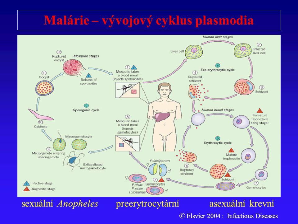 Malárie – vývojový cyklus plasmodia sexuální Anopheles preerytrocytární asexuální krevní  Elsvier 2004 : Infectious Diseases