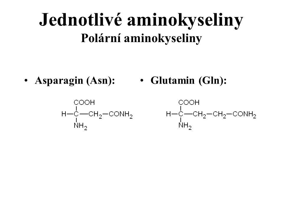 Jednotlivé aminokyseliny Polární aminokyseliny Asparagin (Asn): Glutamin (Gln):