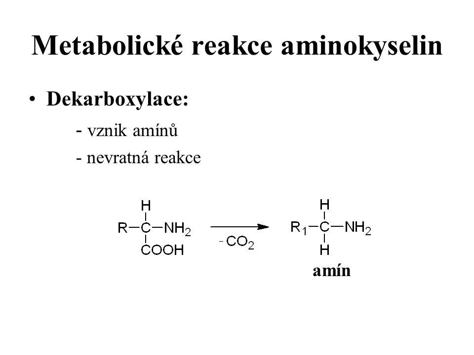 Metabolické reakce aminokyselin Dekarboxylace: - vznik amínů - nevratná reakce amín