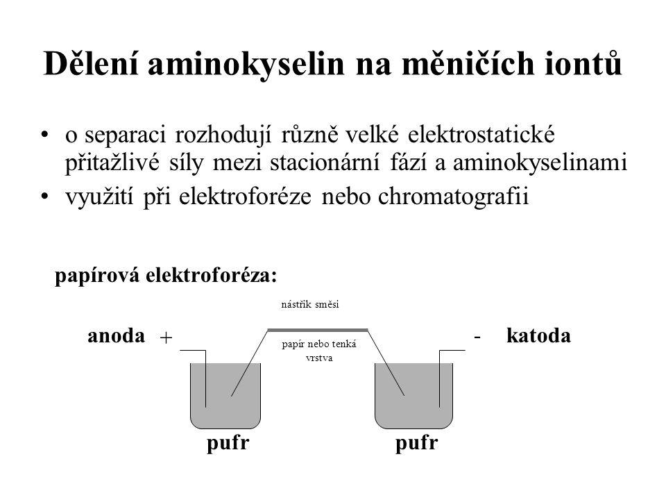 Dělení aminokyselin na měničích iontů o separaci rozhodují různě velké elektrostatické přitažlivé síly mezi stacionární fází a aminokyselinami využití