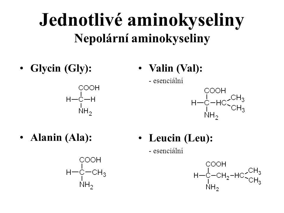 Glycin (Gly): Alanin (Ala): Valin (Val): - esenciální Leucin (Leu): - esenciální Jednotlivé aminokyseliny Nepolární aminokyseliny