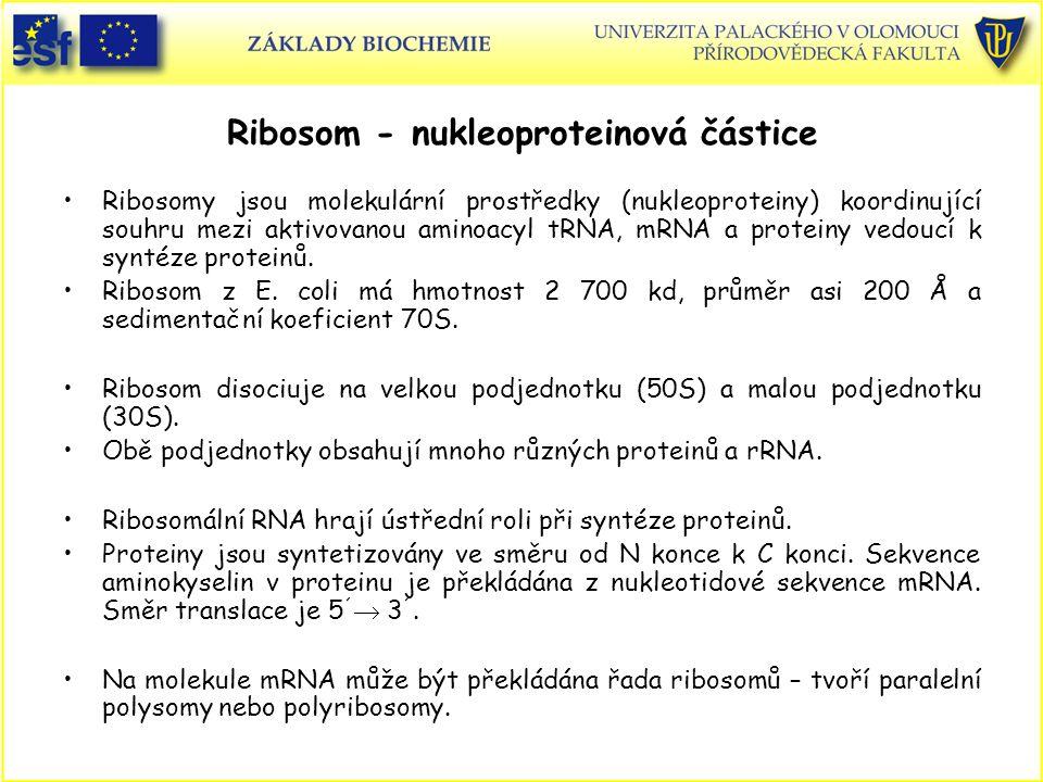 Ribosom - nukleoproteinová částice Ribosomy jsou molekulární prostředky (nukleoproteiny) koordinující souhru mezi aktivovanou aminoacyl tRNA, mRNA a p