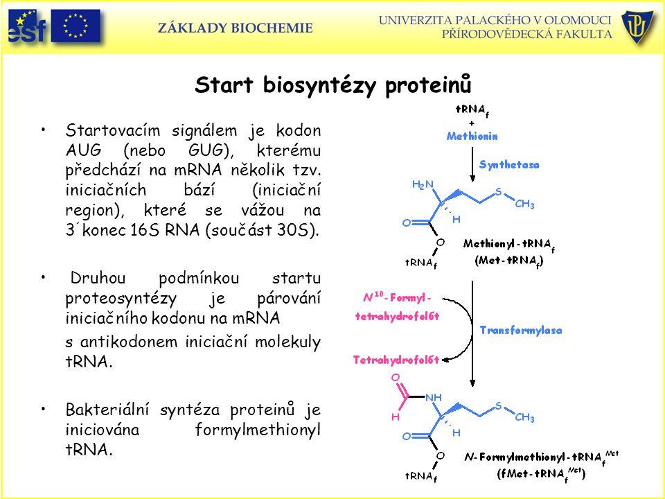 Start biosyntézy proteinů Startovacím signálem je kodon AUG (nebo GUG), kterému předchází na mRNA několik tzv. iniciačních bází (iniciační region), kt