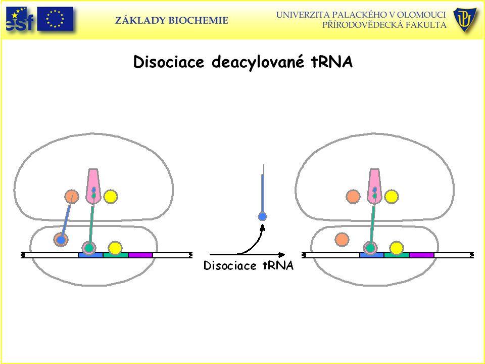 Disociace deacylované tRNA