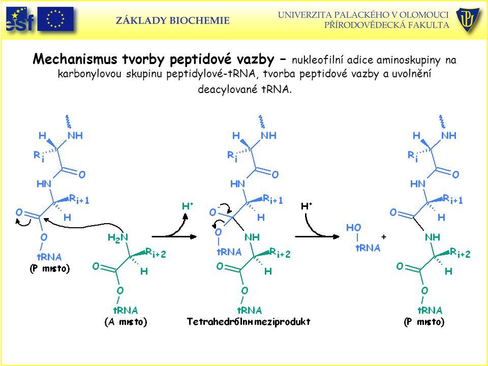Mechanismus tvorby peptidové vazby – nukleofilní adice aminoskupiny na karbonylovou skupinu peptidylové-tRNA, tvorba peptidové vazby a uvolnění deacyl