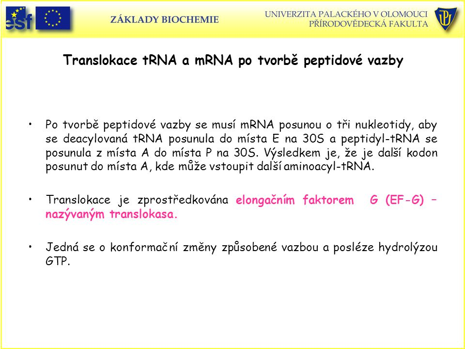 Translokace tRNA a mRNA po tvorbě peptidové vazby Po tvorbě peptidové vazby se musí mRNA posunou o tři nukleotidy, aby se deacylovaná tRNA posunula do