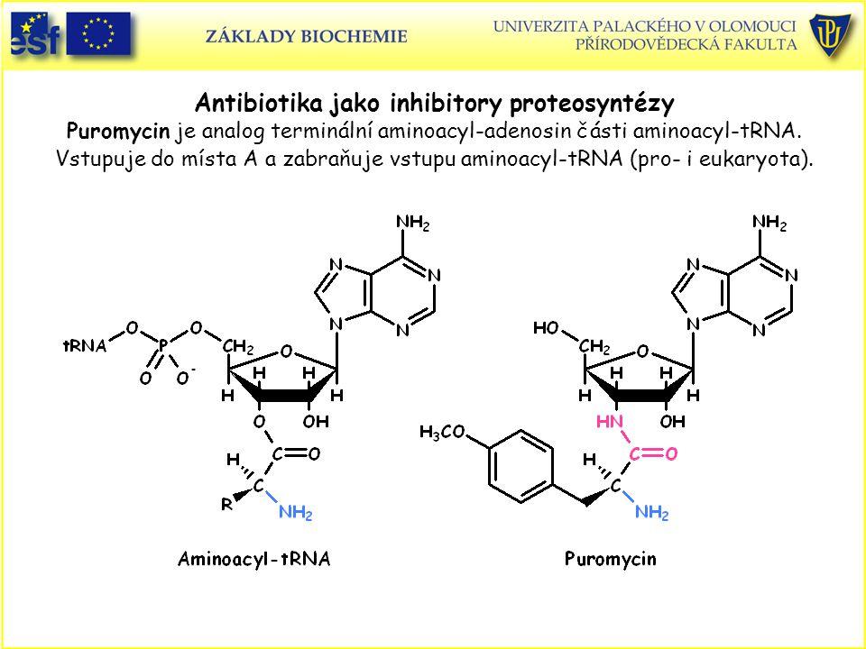 Antibiotika jako inhibitory proteosyntézy Puromycin je analog terminální aminoacyl-adenosin části aminoacyl-tRNA. Vstupuje do místa A a zabraňuje vstu