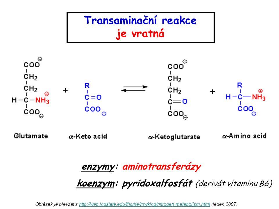 Obrázek je převzat z http://web.indstate.edu/thcme/mwking/nitrogen-metabolism.html (leden 2007)http://web.indstate.edu/thcme/mwking/nitrogen-metabolis