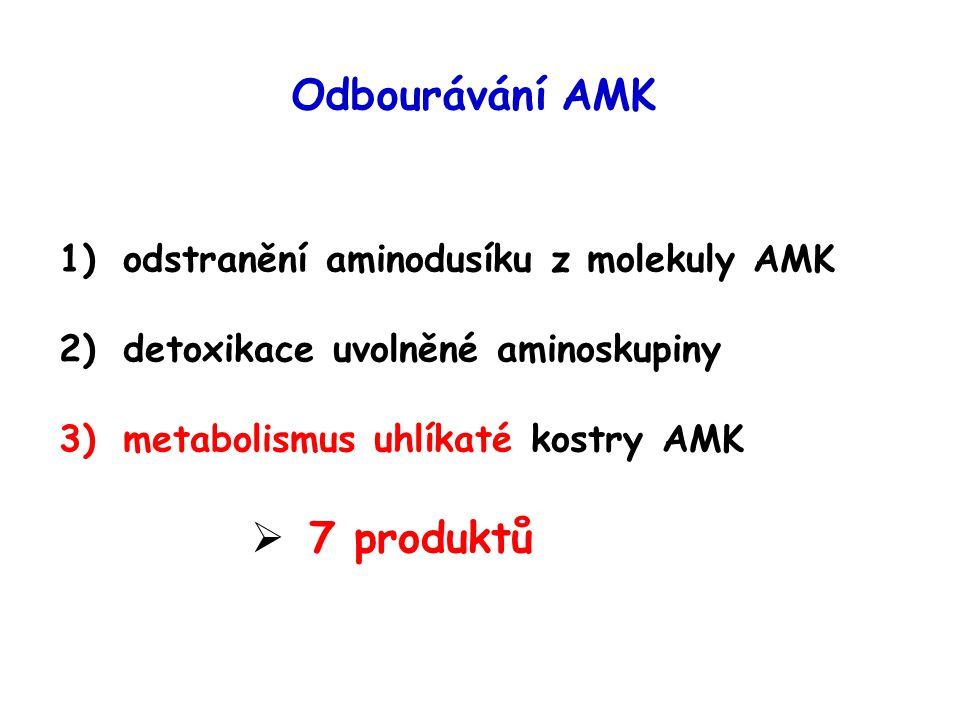 Odbourávání AMK 1)odstranění aminodusíku z molekuly AMK 2)detoxikace uvolněné aminoskupiny 3)metabolismus uhlíkaté kostry AMK  7 produktů