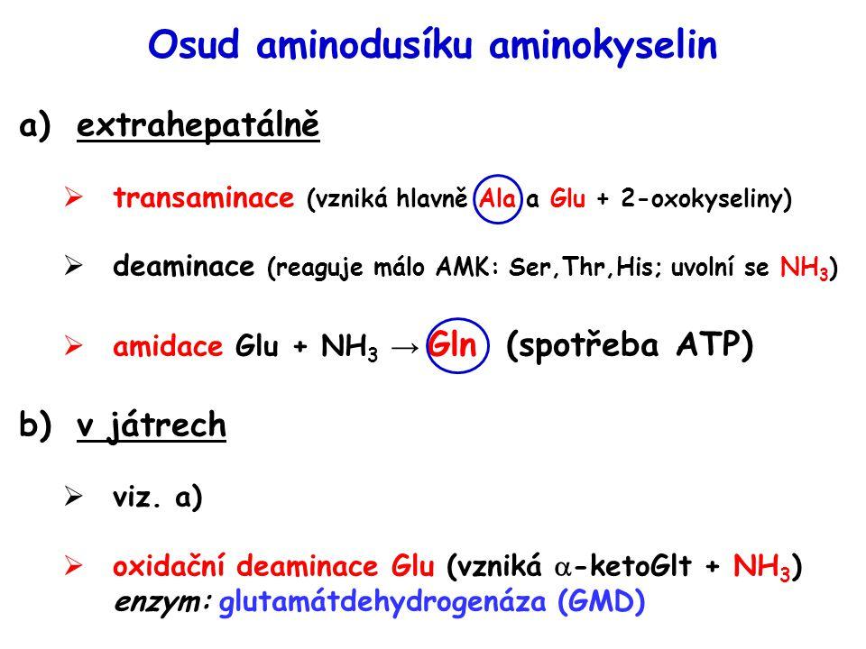 Osud aminodusíku aminokyselin a)extrahepatálně  transaminace (vzniká hlavně Ala a Glu + 2-oxokyseliny)  deaminace (reaguje málo AMK: Ser,Thr,His; uv