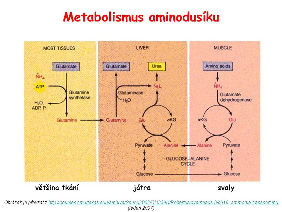 Obrázek je převzat z http://courses.cm.utexas.edu/archive/Spring2002/CH339K/Robertus/overheads-3/ch18_ammonia-transport.jpg (leden 2007)http://courses