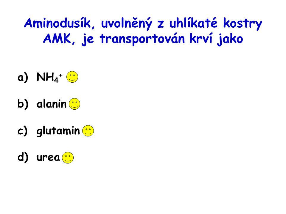 Aminodusík, uvolněný z uhlíkaté kostry AMK, je transportován krví jako a)NH 4 + b)alanin c)glutamin d)urea