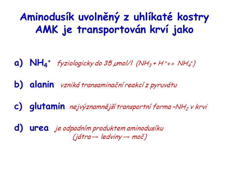 Aminodusík uvolněný z uhlíkaté kostry AMK je transportován krví jako a)NH 4 + fyziologicky do 35 µmol/l (NH 3 + H +  NH 4 + ) b)alanin vzniká transam