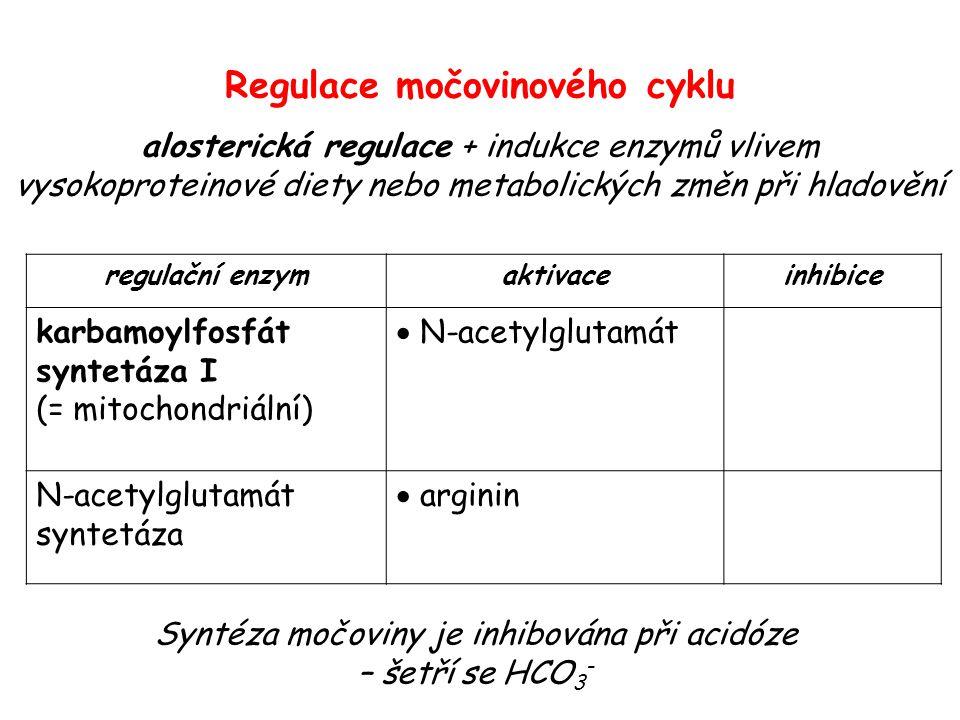 regulační enzymaktivaceinhibice karbamoylfosfát syntetáza I (= mitochondriální)  N-acetylglutamát N-acetylglutamát syntetáza  arginin Regulace močov