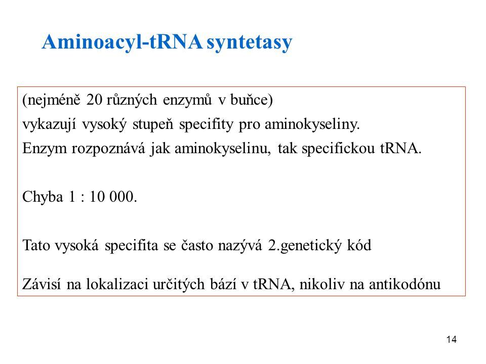 14 Aminoacyl-tRNA syntetasy (nejméně 20 různých enzymů v buňce) vykazují vysoký stupeň specifity pro aminokyseliny. Enzym rozpoznává jak aminokyselinu