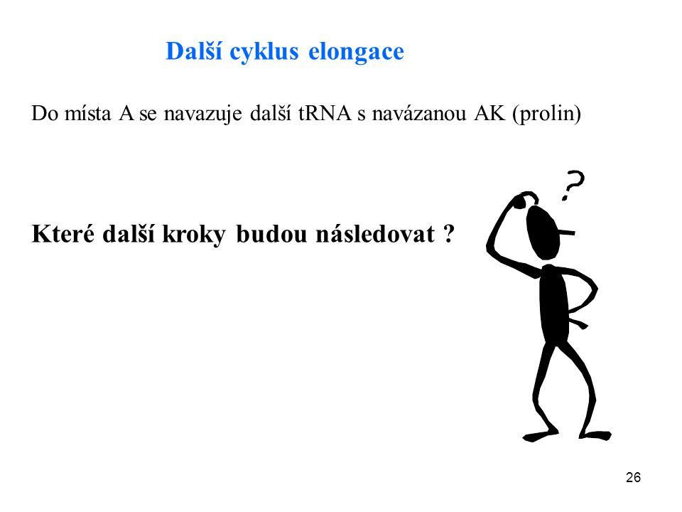 26 Další cyklus elongace Do místa A se navazuje další tRNA s navázanou AK (prolin) Které další kroky budou následovat ?