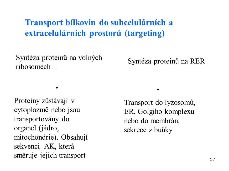 37 Transport bílkovin do subcelulárních a extracelulárních prostorů (targeting) Syntéza proteinů na volných ribosomech Proteiny zůstávají v cytoplazmě