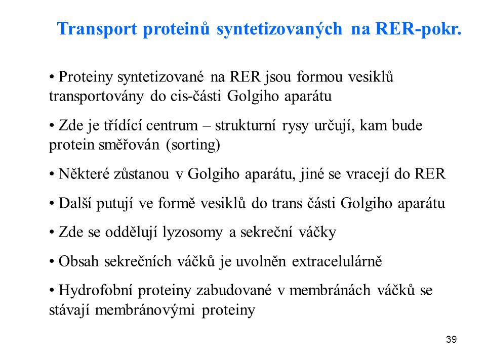 39 Transport proteinů syntetizovaných na RER-pokr. Proteiny syntetizované na RER jsou formou vesiklů transportovány do cis-části Golgiho aparátu Zde j