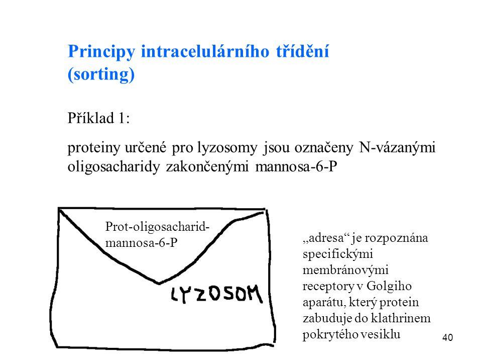 40 Principy intracelulárního třídění (sorting) Příklad 1: proteiny určené pro lyzosomy jsou označeny N-vázanými oligosacharidy zakončenými mannosa-6-P