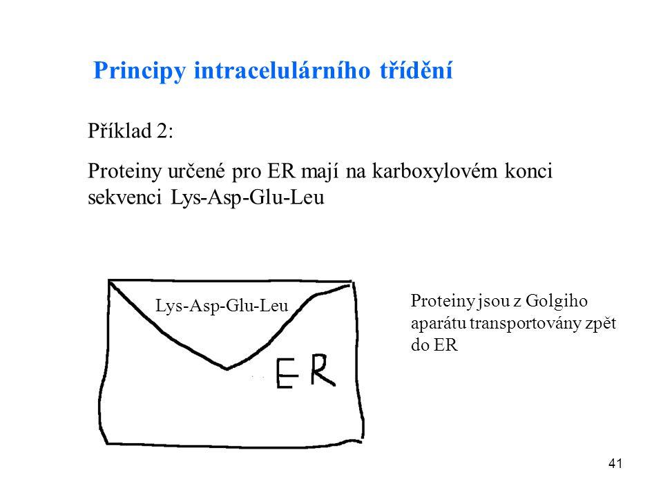 41 Příklad 2: Proteiny určené pro ER mají na karboxylovém konci sekvenci Lys-Asp-Glu-Leu Principy intracelulárního třídění Lys-Asp-Glu-Leu Proteiny js