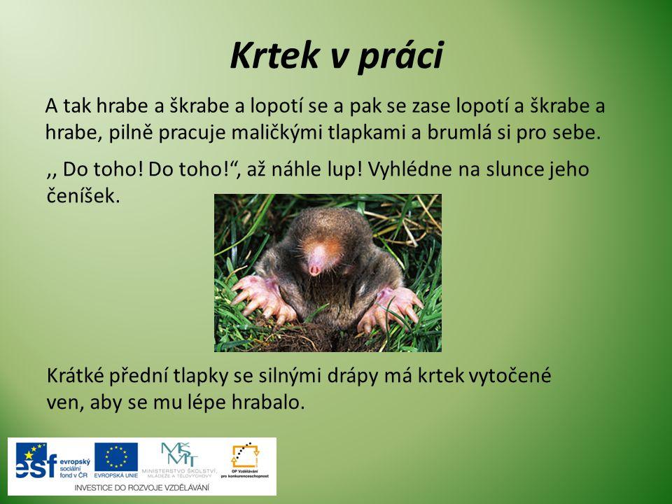 Stavba těla krtka Krtek má válcovité tělo, okolo 12 cm dlouhé.