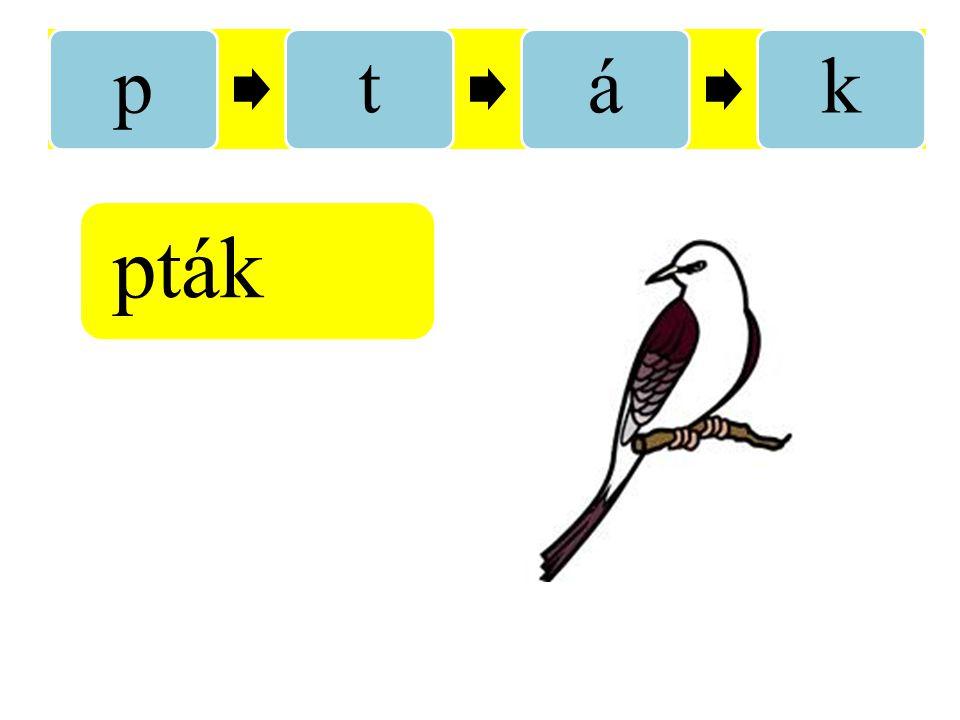 pták pták
