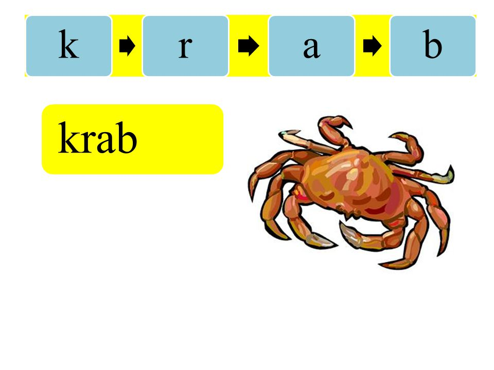 krab krab