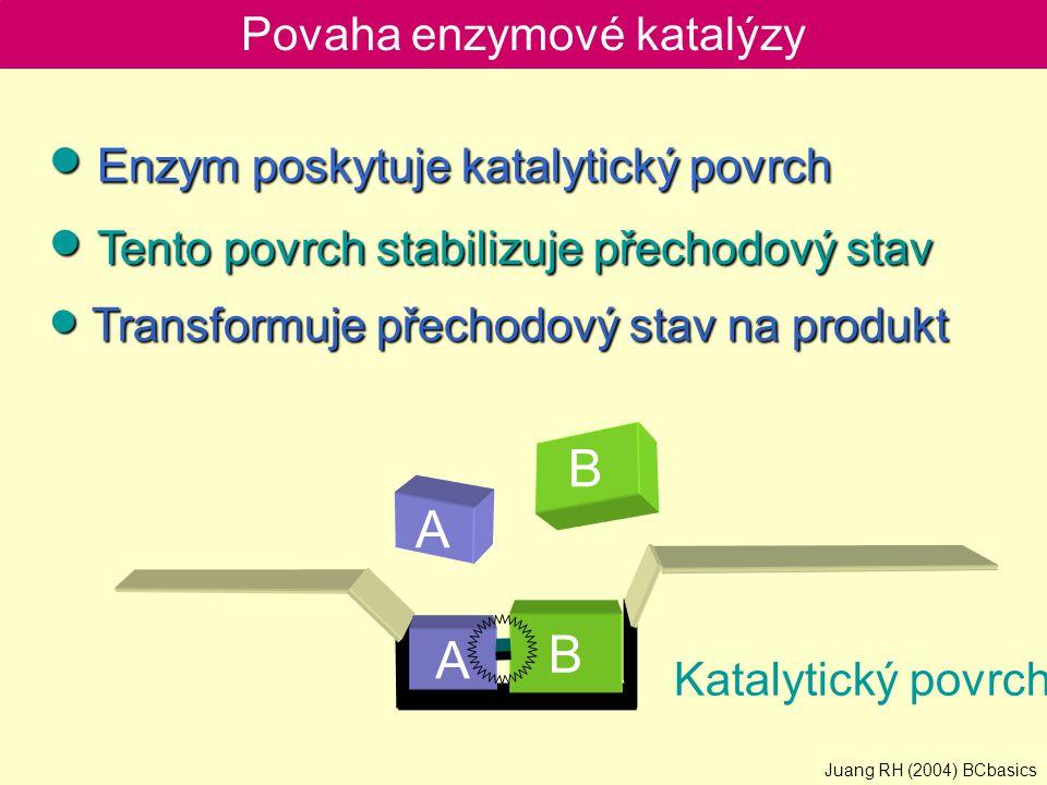 Povaha enzymové katalýzy ● Enzym poskytuje katalytický povrch ● Tento povrch stabilizuje přechodový stav ● Transformuje přechodový stav na produkt B B