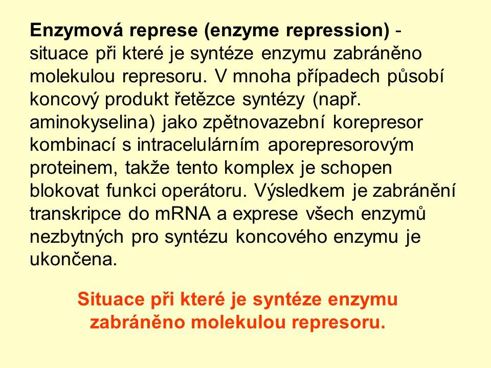 Enzymová represe (enzyme repression) - situace při které je syntéze enzymu zabráněno molekulou represoru. V mnoha případech působí koncový produkt řet