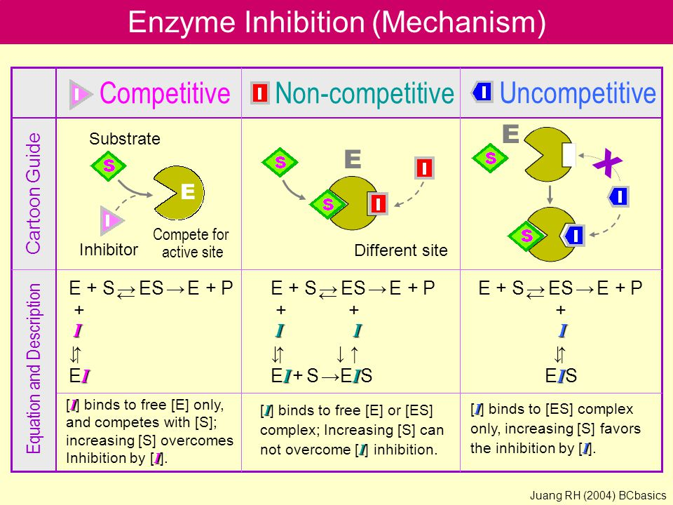 Enzyme Inhibition (Mechanism) CompetitiveNon-competitive Uncompetitive E E Different site Compete for active site Inhibitor Substrate Cartoon Guide Equation and Description I [ I ] binds to free [E] only, and competes with [S]; increasing [S] overcomes I Inhibition by [ I ].