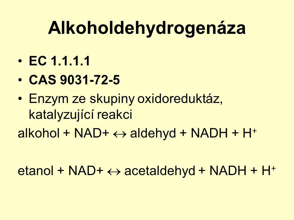 Alkoholdehydrogenáza EC 1.1.1.1 CAS 9031-72-5 Enzym ze skupiny oxidoreduktáz, katalyzující reakci alkohol + NAD+  aldehyd + NADH + H + etanol + NAD+
