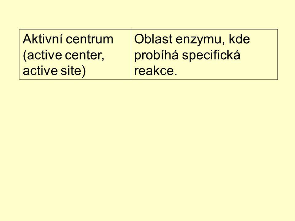 Aktivní centrum (active center, active site) Oblast enzymu, kde probíhá specifická reakce.