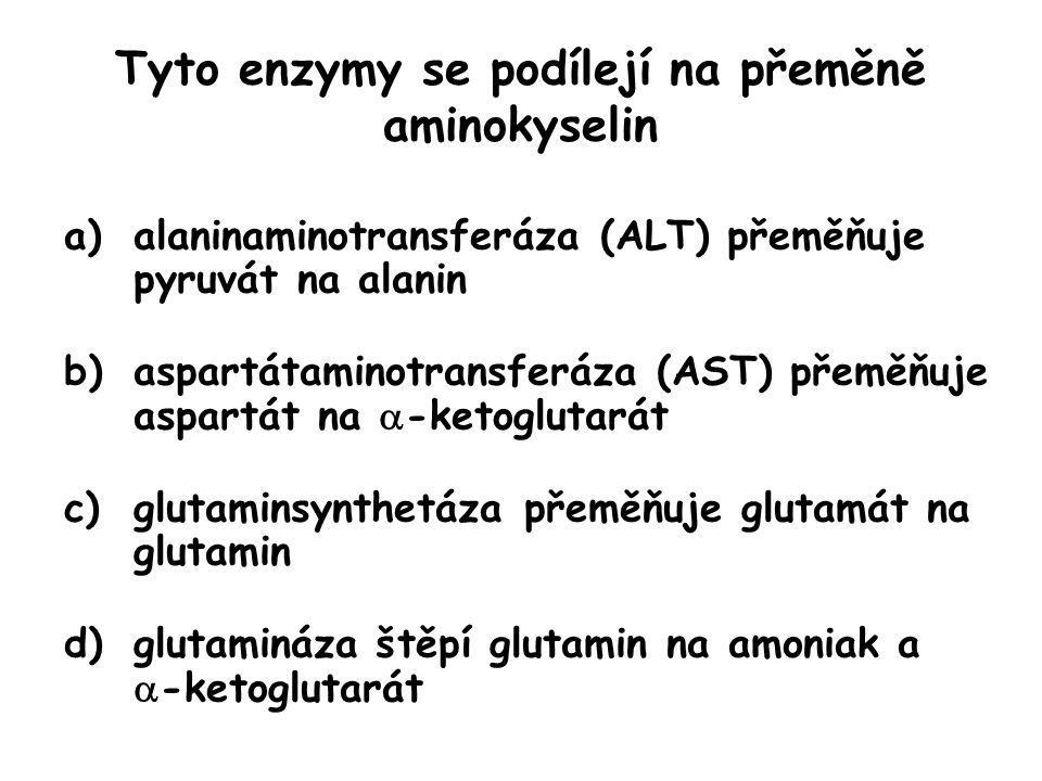Tyto enzymy se podílejí na přeměně aminokyselin a)alaninaminotransferáza (ALT) přeměňuje pyruvát na alanin b)aspartátaminotransferáza (AST) přeměňuje