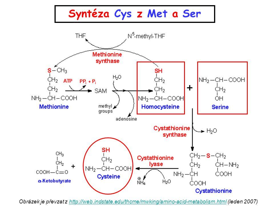 Vyberte správné produkty transaminační reakce těchto aminokyselin: a)alanin → pyruvát b)glutamát → 2-oxoglutarát c)aspartát → oxalacetát d)phenylalanin → tyrosin