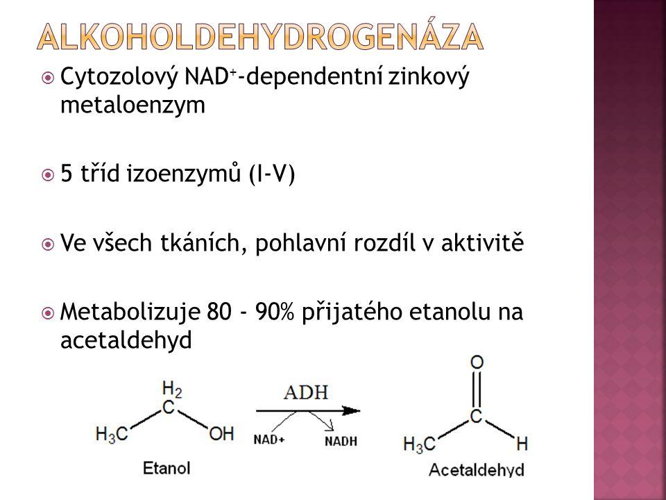  Cytozolový NAD + -dependentní zinkový metaloenzym  5 tříd izoenzymů (I-V)  Ve všech tkáních, pohlavní rozdíl v aktivitě  Metabolizuje 80 - 90% př