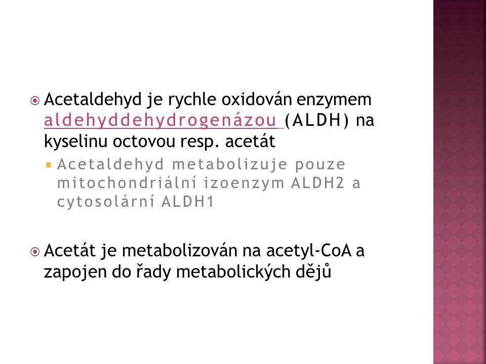  Acetaldehyd je rychle oxidován enzymem aldehyddehydrogenázou (ALDH) na kyselinu octovou resp. acetát  Acetaldehyd metabolizuje pouze mitochondriáln