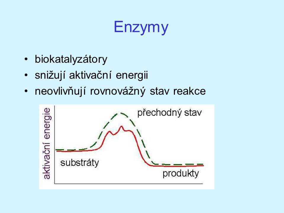 Enzymy biokatalyzátory snižují aktivační energii neovlivňují rovnovážný stav reakce