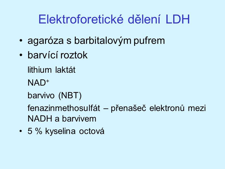 Elektroforetické dělení LDH agaróza s barbitalovým pufrem barvící roztok lithium laktát NAD + barvivo (NBT) fenazinmethosulfát – přenašeč elektronů me