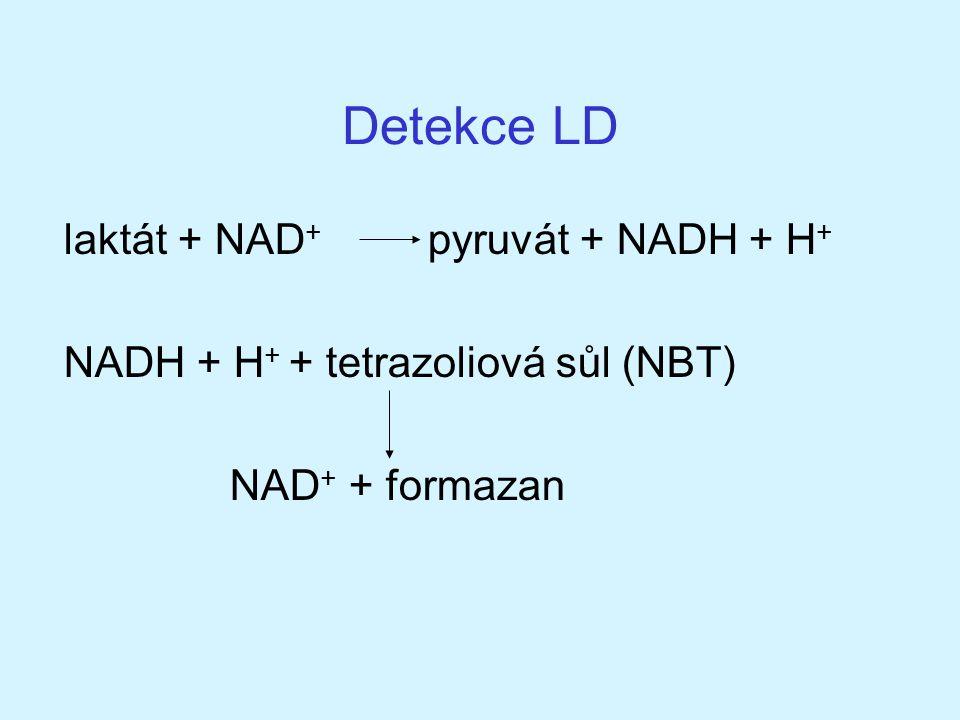 Detekce LD laktát + NAD + pyruvát + NADH + H + NADH + H + + tetrazoliová sůl (NBT) NAD + + formazan