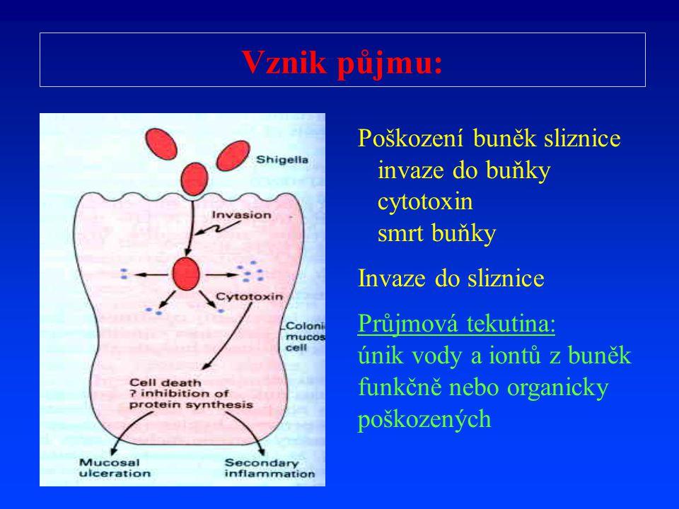 Vznik p ů jmu: Poškození buněk sliznice invaze do buňky cytotoxin smrt buňky Invaze do sliznice Průjmová tekutina: únik vody a iontů z buněk funkčně n