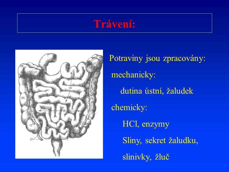 Trávení: Potraviny jsou zpracovány: mechanicky: dutina ústní, žaludek chemicky: HCl, enzymy Sliny, sekret žaludku, slinivky, žluč