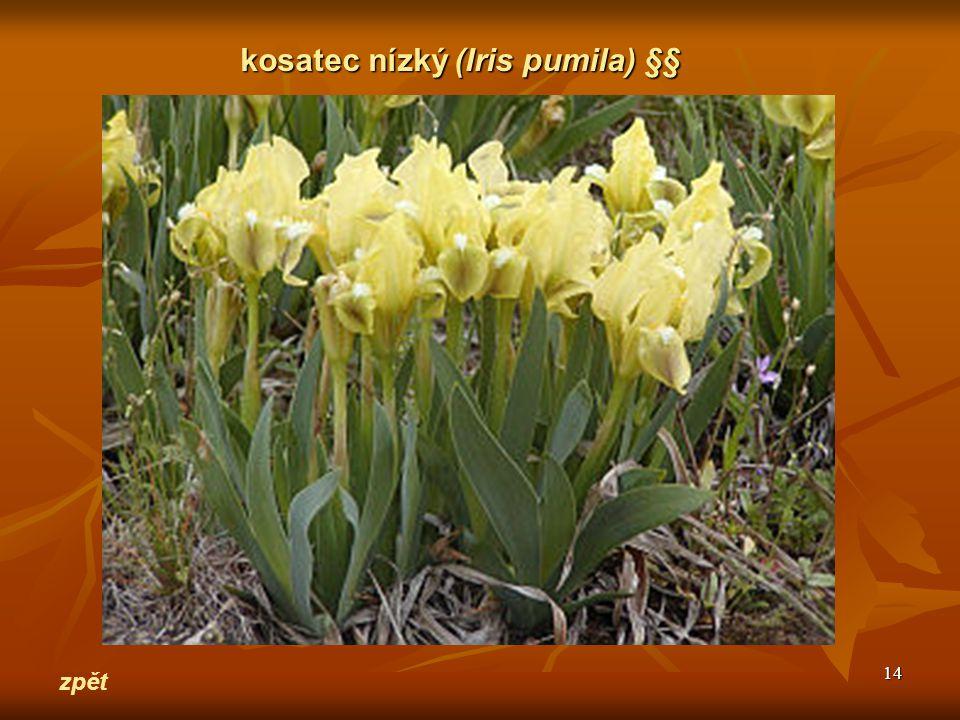 14 zpět kosatec nízký(Iris pumila) §§ kosatec nízký (Iris pumila) §§